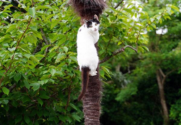 画像: 「山ねこ」らしく木登りをする。