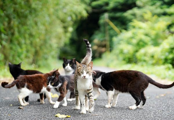 画像: 一気に沢山の猫たちが集まってくる。