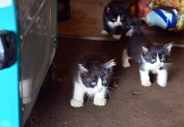 画像: 建物内からわらわらと現れた子猫たち。