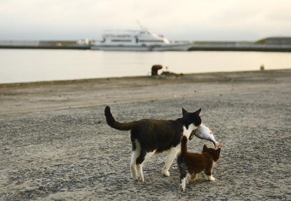 画像: お魚をくわえた母猫を追いかける子猫(2013年)。