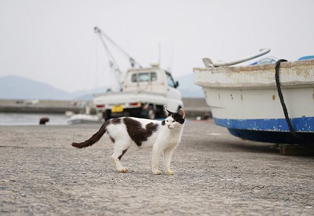 画像: かつてはたくさんの猫たちが港で暮らしていた。