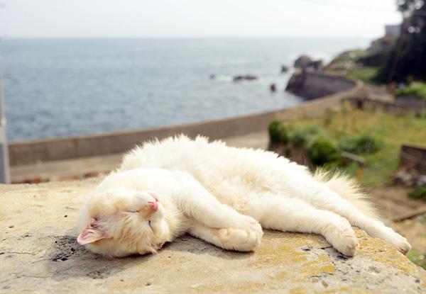 画像: 潮風に吹かれて気持ちよさそうです。