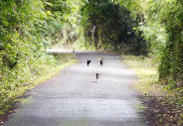 画像: 一本道の向こうからやってくる猫たち。