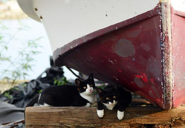 画像: 港にあるものが猫たちの暮らす場所であり遊び場でもある。