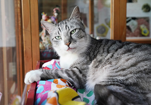 画像: 近所でも人気のイケメン猫。