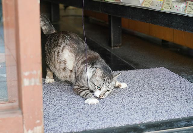 画像: 猫じゃらしでなくても遊んでくれる。