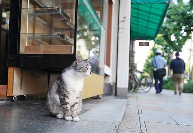 画像: 店頭でお行儀良く座る良き看板猫。