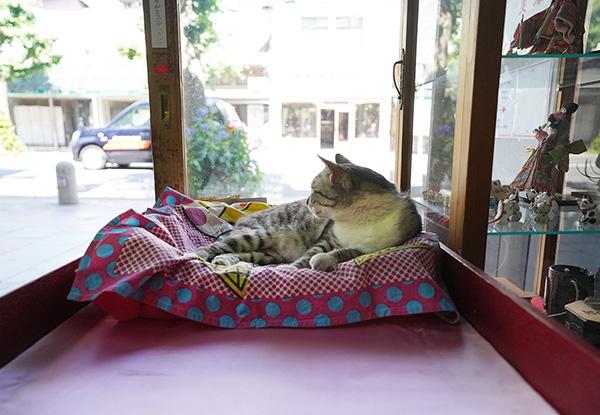 画像: 疲れたら所定の場所で寝転び接客。