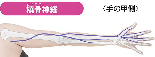 画像: 首から出て鎖骨の下、腕の親指側を通り、親指の付け根、手の甲側の親指、人さし指、中指の痛みを伝える。