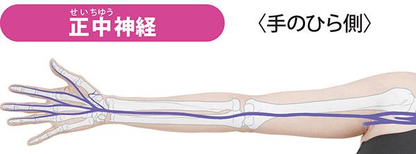 画像: 首から出て鎖骨の下、ひじの真ん中、手首の手根管を通り、手のひら側の親指、人さし指、中指、薬指の半分(中指側)の痛みを伝える。