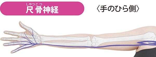 画像: 首から出て鎖骨の下、腕の小指側を通り、小指と薬指の半分(小指側)の痛みを伝える。