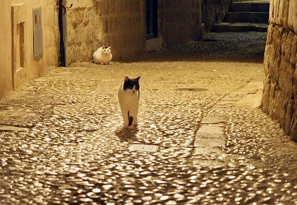 画像: 雰囲気のある中世の街角と闊歩する猫たち。