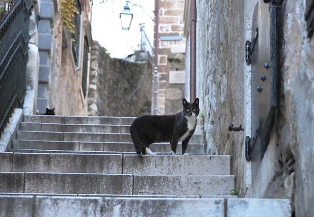 画像: 絵になる街での猫との出会いに胸が高鳴ります。