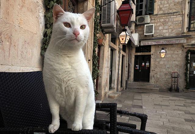 画像: 近づいても、他の猫のように逃げださない。