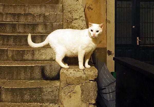 画像: 暗い中でも白猫は目立っています。
