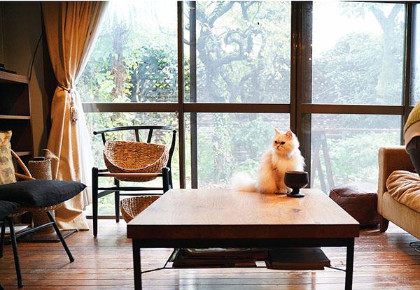 画像: 天気が良ければテラスのある庭はお気に入りの場所。