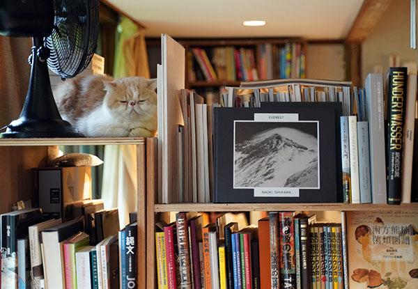 画像: 本棚の左上、まるでオブジェのような佇まいのび副店長。