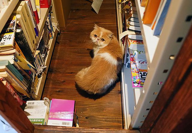 画像: 警戒して本棚の奥へ隠れます。