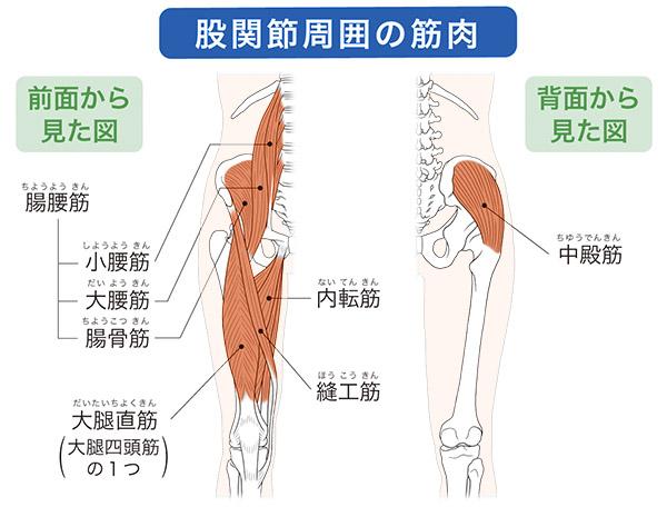 画像: 股関節周辺の筋肉を鍛えると痛みが改善