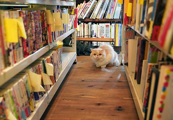 画像: 古書店の副店長のび。