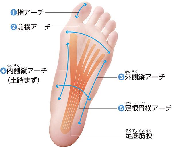 画像: 股関節痛の人は「足の小指」が使えていない