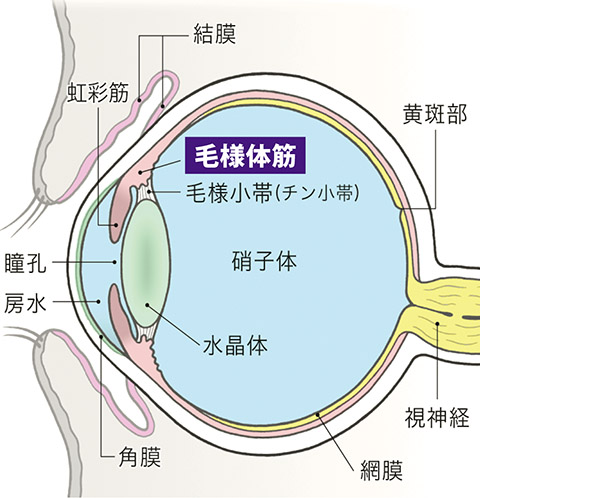 画像: 交感神経が優位だと目のトラブルが増える
