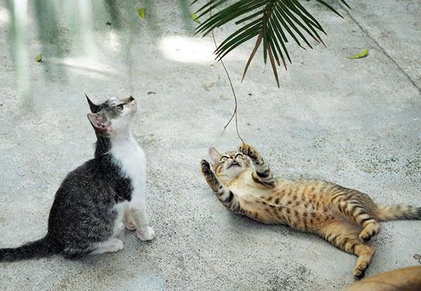 画像: 2匹の子猫は遊びに夢中。
