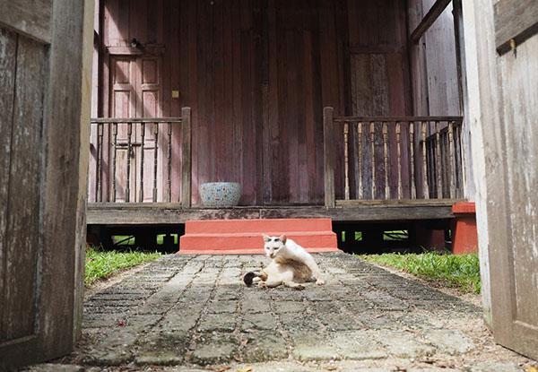 画像: 扉の中にはコテージの門番のような白黒猫。