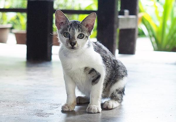 画像: 好奇心旺盛な子猫たち。