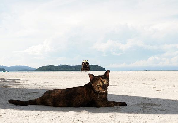 画像: マレーシアのビーチ猫はサビ柄。