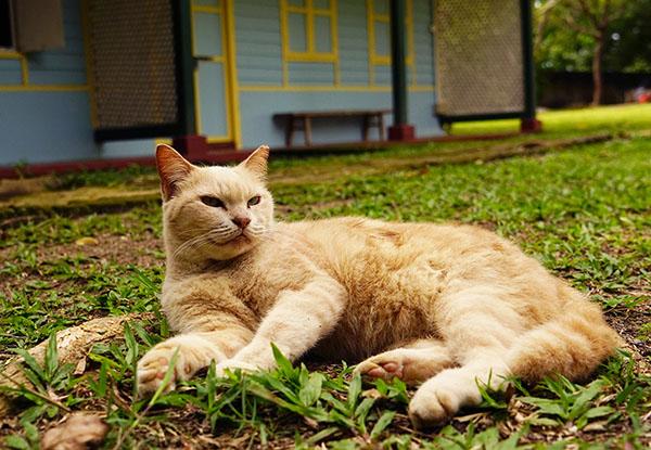 画像: コテージの敷地内で猫がおのおのくつろぐ。