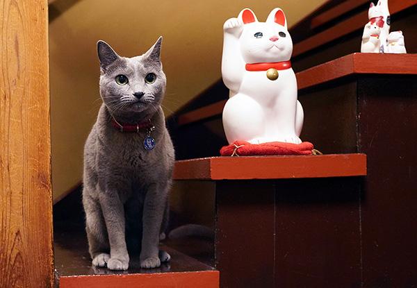 画像: リアル招き猫です。