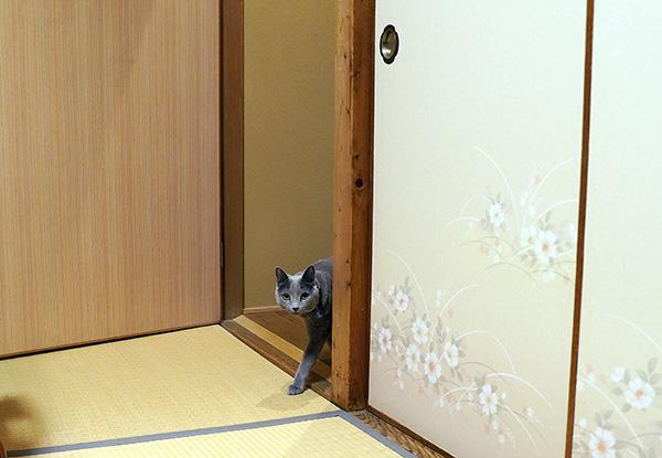 """画像: 扉を開けておくのが""""女将訪問OK""""の合図。"""