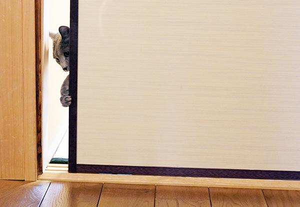 画像: 襖を開ける仕草がとてもかわいい。