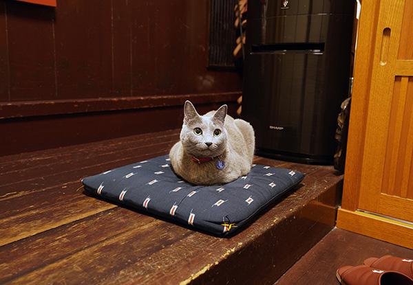 画像: 玄関の座布団がお気に入りの場所。