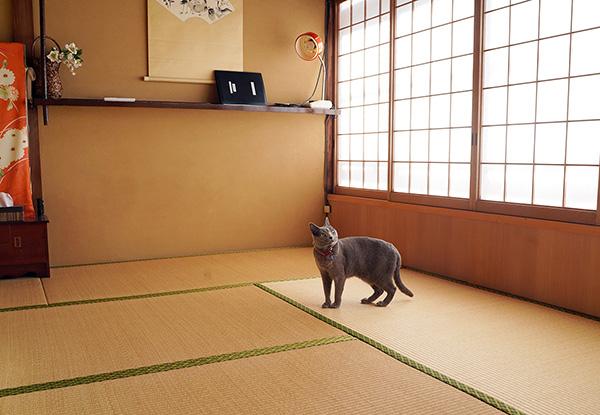 画像: 居心地の良い和室です。