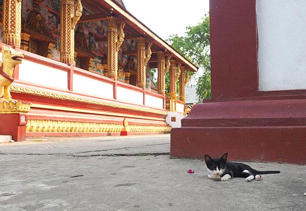 画像: Wat Manorom(ワット・マノーロム)の子猫。
