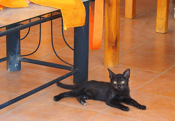 画像: 黒猫の子猫も床でひんやり。