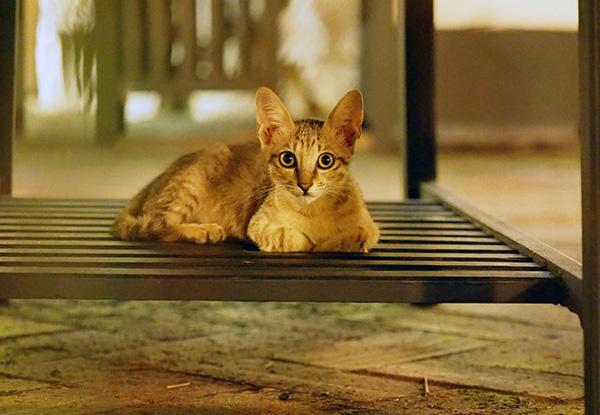 画像: 庭付きの高級レストランにいた子猫。