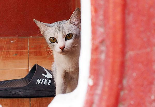 画像: 隙間から様子をうかがう小さな猫。