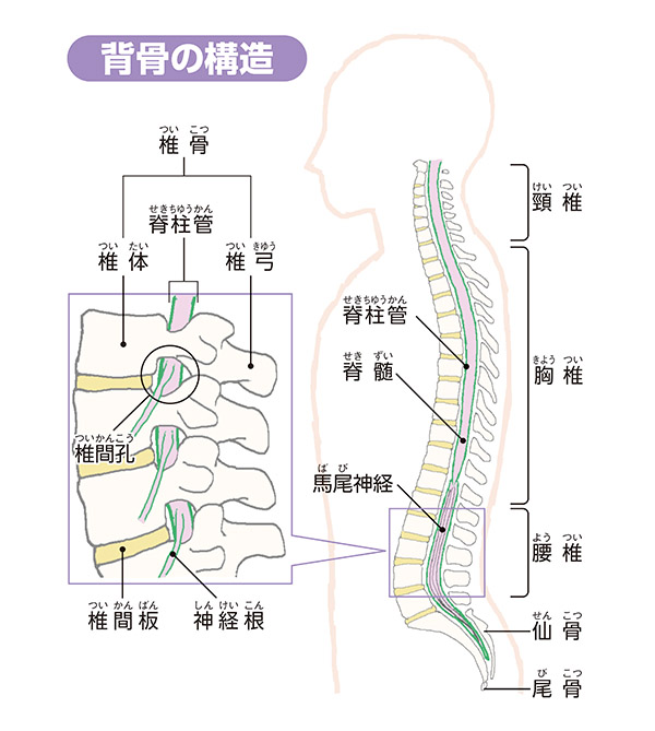 画像: 症状の悪化に伴い歩ける時間が短くなる