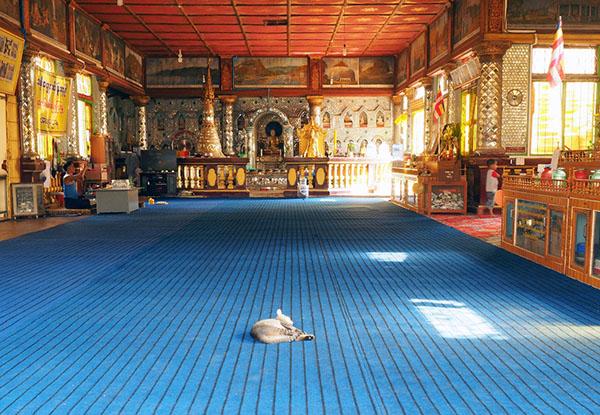 画像: 堂々と中央でお昼寝中。