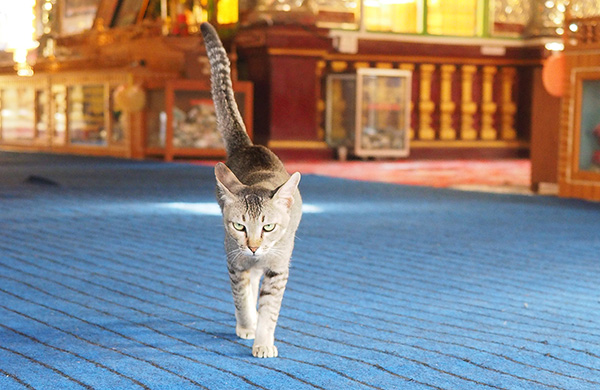 画像: 好奇心旺盛な猫は興味津々でこちらに向かってきました。