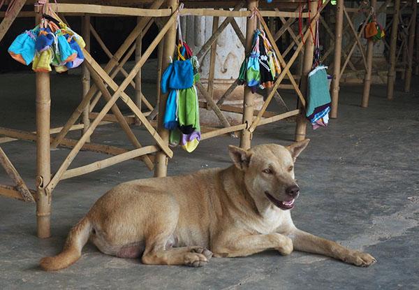 画像: お土産の番をする犬。