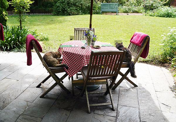 画像: このテラス席には、2匹の猫の姿があります。