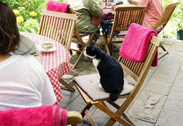 画像: お客さまのお食事中も、お行儀良く座っています。
