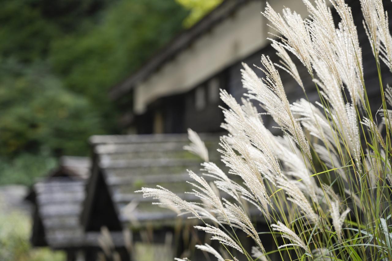 画像4: 憧れの秘湯「鶴の湯温泉」へ