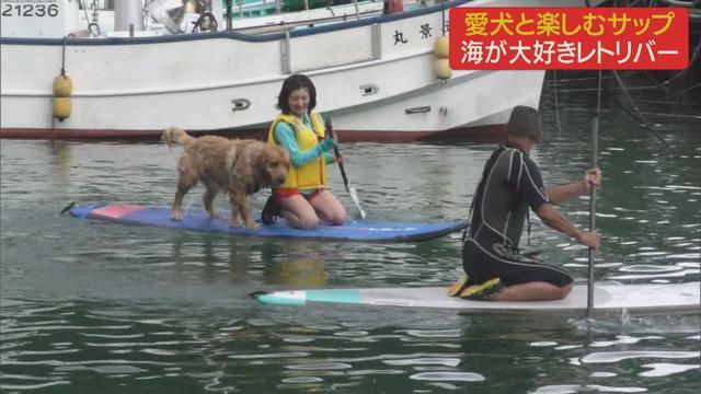 画像1: 愛犬と楽しむサップ 一緒に海へ 静岡・伊東市