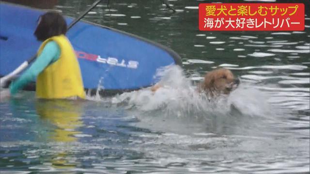 画像2: 愛犬と楽しむサップ 一緒に海へ 静岡・伊東市