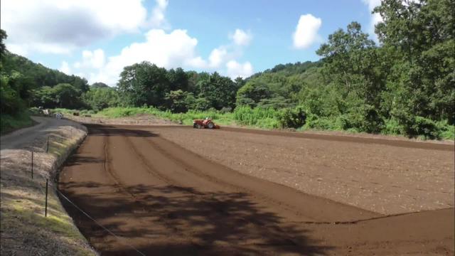 画像: ソバ栽培に使われる休耕田